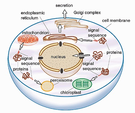 cell biology assignment helpassignment help upto  cell biology assignment help